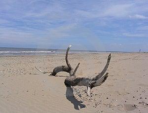 Driftwood på strand Arkivfoton