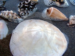 Sea-shells 1 Free Stock Photography