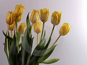 Bouquet Of Tulips Free Stock Photography