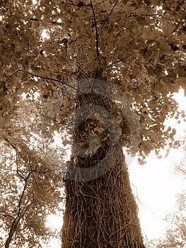 Big Tree Free Stock Photos