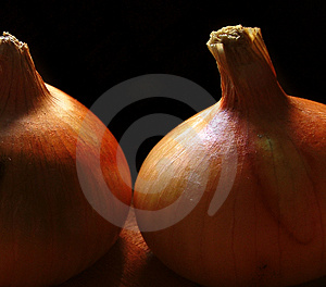 Onion Study 1 Stock Photography