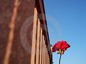 Lone Flower Stock Images