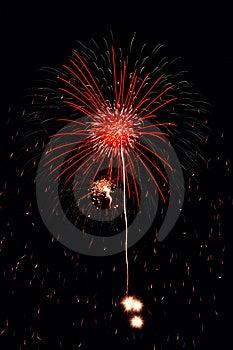 Fireworks Flower Free Stock Image