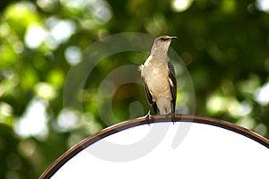 Bird On A Mirror Stock Photography
