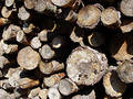 Woodpile Free Stock Photography