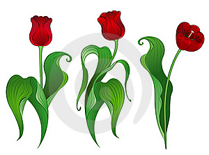 Three Red Tulips Stock Photo - Image: 19026990