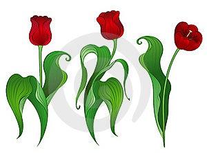 Three Red Tulips Stock Photo - Image: 19026990