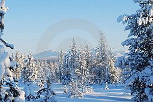 Fantastic Wood Royalty Free Stock Images - Image: 19034889