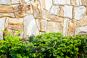 Textured Stone Wall And Plants Stock Photo - Image: 19039450
