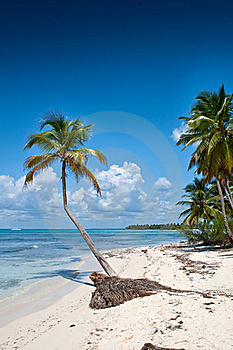 Green Palms On White Sand Beach Under Blue Sky Stock Photography - Image: 19046022