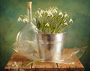 Snowdrops Bunch Stock Images - Image: 19046324