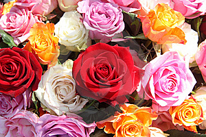 Rose Arrangement Stock Image - Image: 19048091