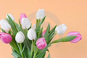 Tulips On Pastel Blue Watercolor Background Royalty Free Stock Photos - Image: 19048468