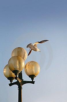 Seagull Stock Photos - Image: 19050133
