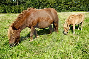 Horse And Foal Stock Photo - Image: 19053070
