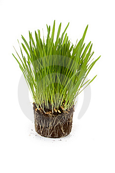 Green Grass Royalty Free Stock Images - Image: 19054149