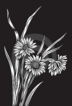 Black And White Flowers Royalty Free Stock Image - Image: 19060096