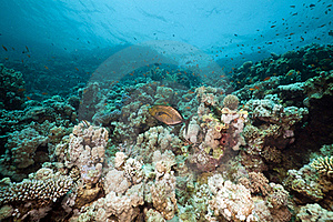 Underwater Scenery In The Red Sea. Royalty Free Stock Photography - Image: 19063797