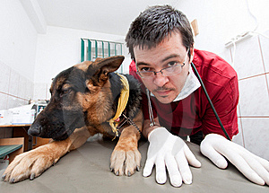 Funny vet with dog Royalty Free Stock Image