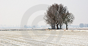 Snowy Landscape With Trees Royalty Free Stock Photos - Image: 19068298