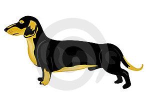 Dog Rate Stock Photo - Image: 19070600