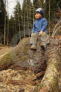 Child On Stump Stock Images - Image: 19073874