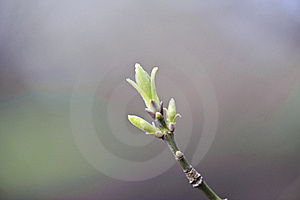 Close Up Of Bud On The Branch Stock Photography - Image: 19075502