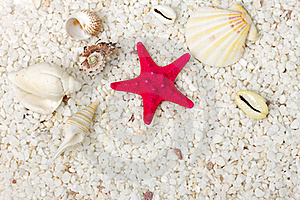 Sand And Sea Shells Background. Royalty Free Stock Photo - Image: 19087165