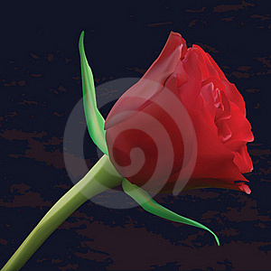 Red Rose On Dark Background Stock Photo - Image: 19094360