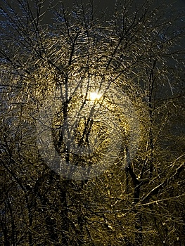 The Iced Over Trees. Winter Night. Sleet. Royalty Free Stock Photography - Image: 19097407