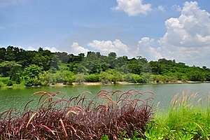 A Garden By The River In Punggol Royalty Free Stock Photos - Image: 19102288