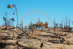 Bushfire Stock Photos - Image: 19123393