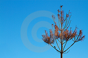 Burnt Tree Royalty Free Stock Photography - Image: 19123397