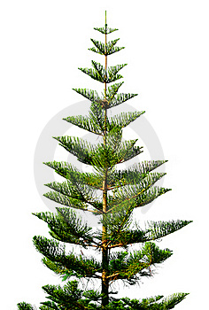 Exotic Green Tree Stock Image - Image: 19123631