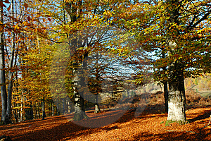 Park In Autumnal Colors Royalty Free Stock Photo - Image: 19124775