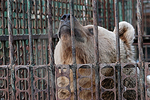 Bear In Captivity Stock Images - Image: 19127614