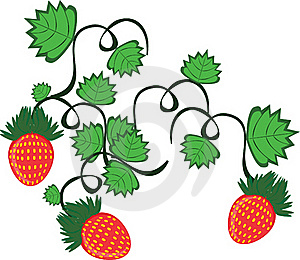 Curl From Strawberry Berries Royalty Free Stock Photography - Image: 19131107