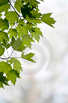 Frame Of Leaves Royalty Free Stock Image - Image: 19131306