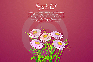 Bunch Of Daisy Royalty Free Stock Images - Image: 19131639