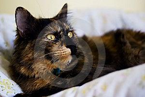 Cat Stock Photo - Image: 19134010