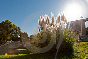 Grass In The Sun Royalty Free Stock Image - Image: 19134516