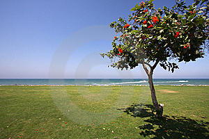 Tree On The Shore Royalty Free Stock Photos - Image: 19137898