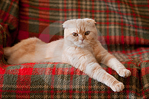 Cat Stock Photo - Image: 19143370