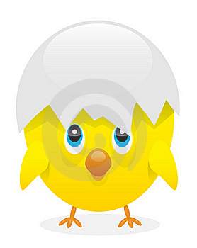 Chick Stock Images - Image: 19144484