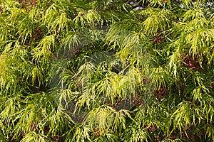 Foliage Stock Image - Image: 19146421