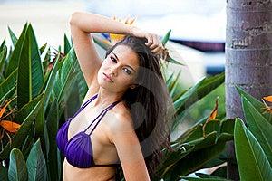 Young Woman Posing In A Bikini Stock Photo - Image: 19148890