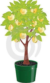 Monetary Tree Stock Photo - Image: 19149140