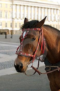 Head Of A Horse Stock Photos - Image: 19162703