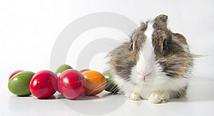 Bunny With Colored Eggs Stock Images - Image: 19164874