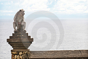 Monkey On Uluwatu Temple Royalty Free Stock Photos - Image: 19165738